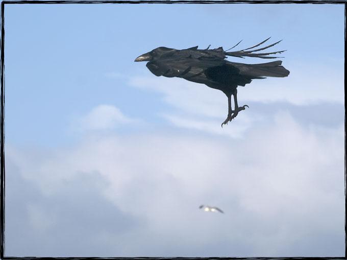 Super Raven