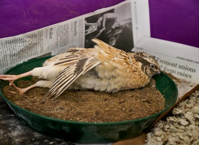 Bird Bath Bliss