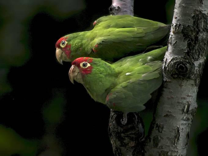 Parrot City