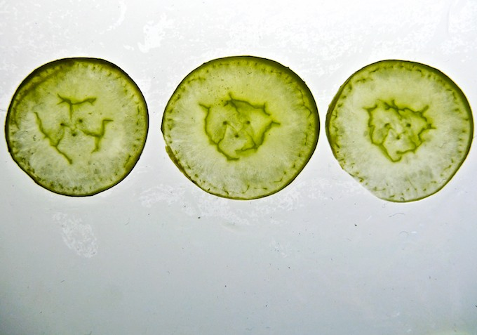 Faces in Food