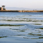 Middle Harbor Shoreline