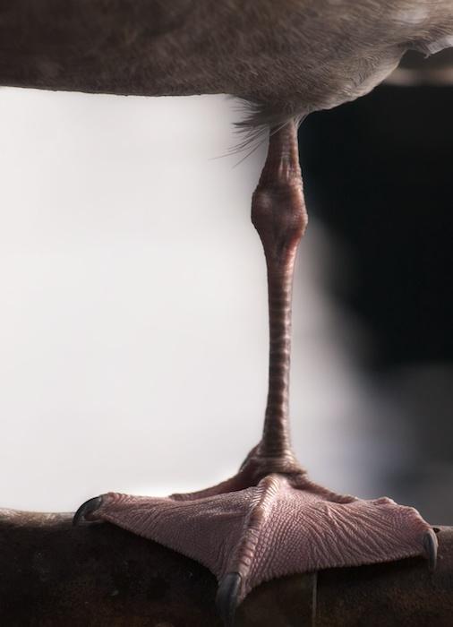 The Art of Gull Feet