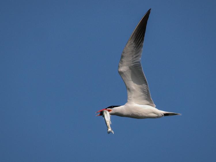 Breaking in the New [Tern] Lens