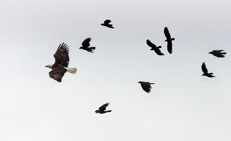 The Crow Patrol