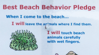 Best Behavior Beach Pledge + Other Signs