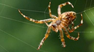 The Tenacity of Spiders