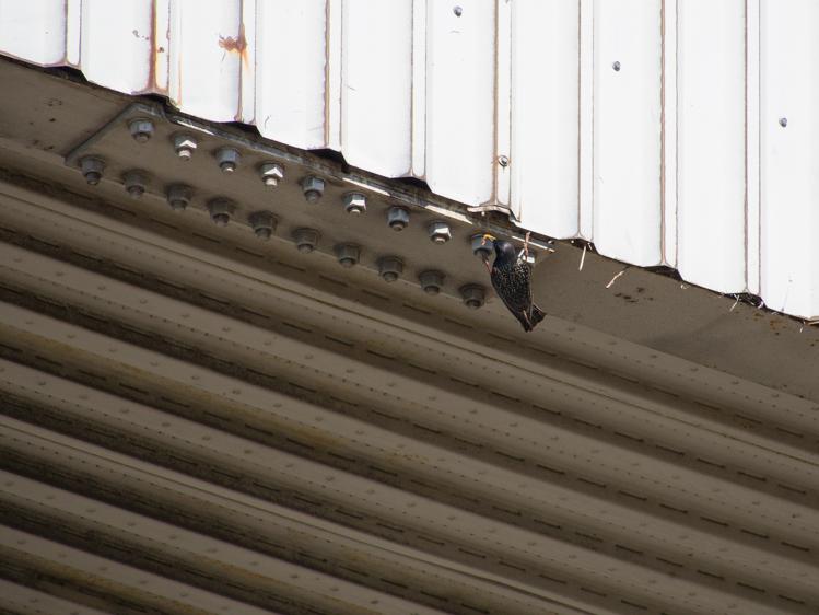 Starling Habitat - ©ingridtaylar
